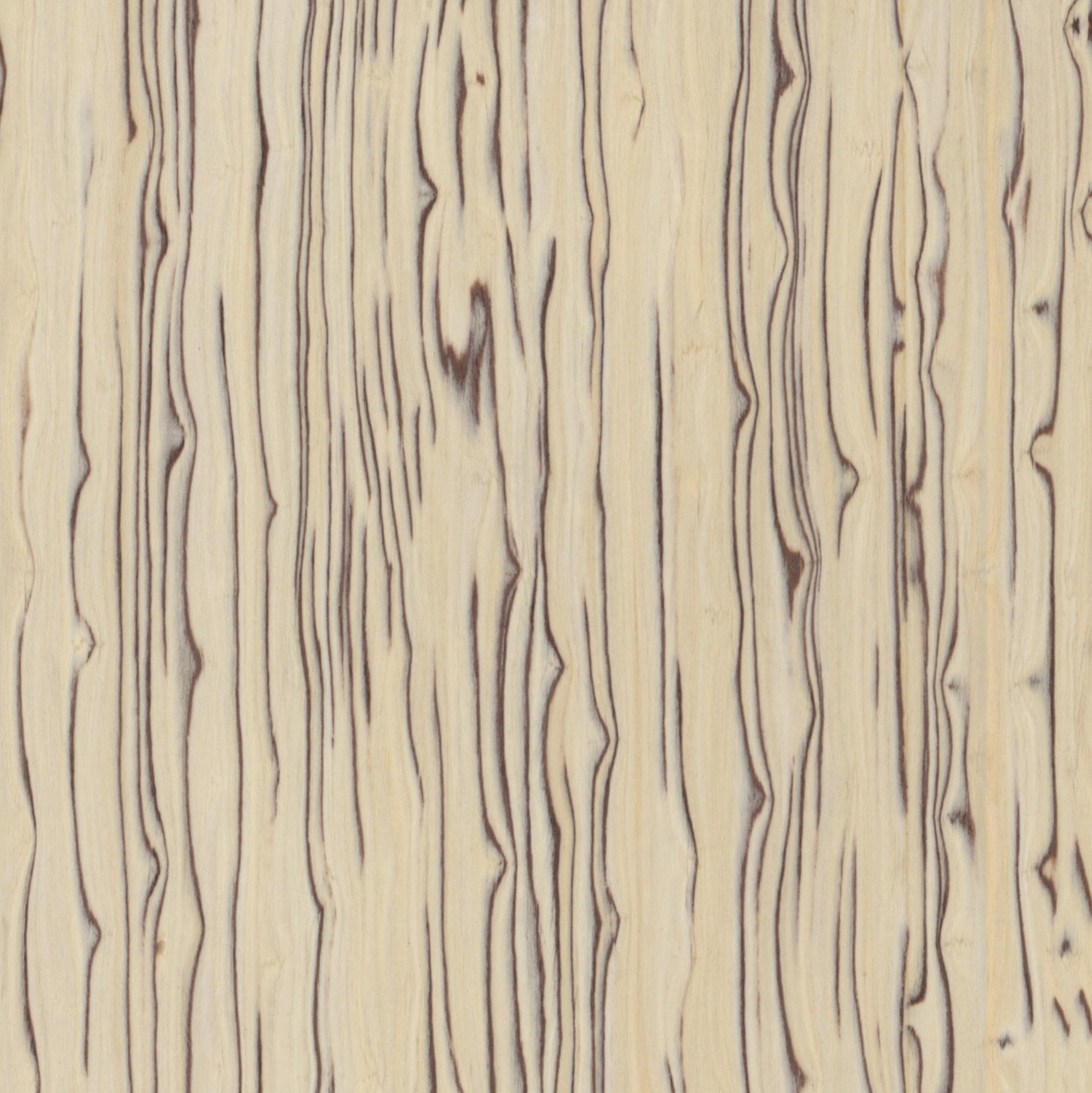Fornir Drzewo Lodowe Bianco